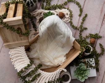 Organic Succulent with Cactus newborn digital backdrop/digital background