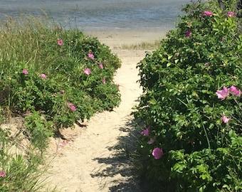 Photo Art, Beach Art, Beach House Art, Ocean Artwork,  Beach Path Artwork, Fine Art Photo