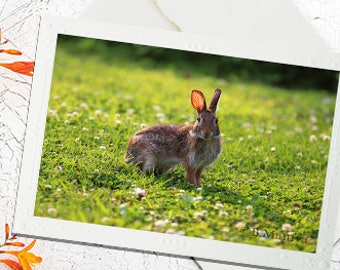 Greeting Cards, Photography Note Card, Photography cards, Blank Note Cards, Greeting Cards, Bunny, Easter Card, Spring, Photo Cards