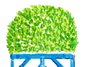 Boxwood Planter Print