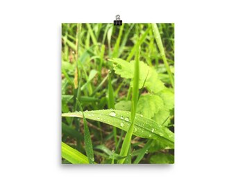 Water Droplets on Leaf / Photography Print / Photo paper poster