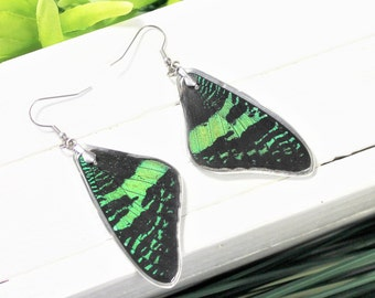 9f25283e7cd021 Real Sunset Moth Wing v2, Real Wing Earrings, Rainbow Moth Earrings,  Colorful Moth Earrings, Entomology, Moth Wing Encased in Resin, Insect