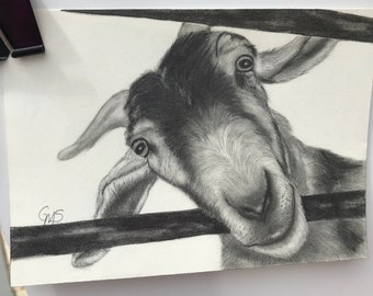 Original Drawing -Goat - 5 x 7 pencil drawing