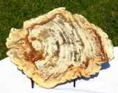 Petrified Wood Slice Specimen,Platter, trivet, natural Rock ,Petrified wood,Fossilized wood, home decor, Grounding Stone, natural stone