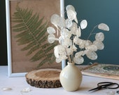Dried flowers,Silver Dollar,Natural Pearl Lunaria stems,Lunaria Biennis bouquet,Dried money plant,Lunaria branches,honesty plant,vase filler
