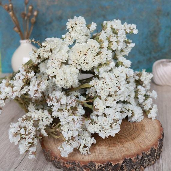 Dried white statice dried statice bouquet dried flowers etsy 50 mightylinksfo