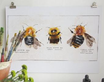 Bumblebee Art Print, Illustration Nature Print, British Nature, Bee Print, British Bumblebee Print, Nature Print, Wall Print, Wildlife