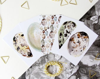 Gift Wrapping Organisational Tags, Bird Egg Illustrated Gift Tags