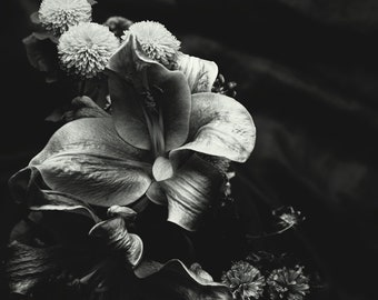 Artist signed black and white, warm toned fine art photographic print: Dying Botanical, 2018.