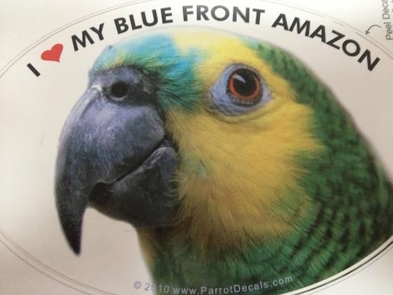 Blue Front Amazon Turquoise Fronted Amazon Parrot Exotic Etsy