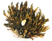 Rose of Jericho Resurrection Fern Live Plant Altar Tool Good Fortune Ritual Witchcraft Green Witch Live Fern Dormant Plant