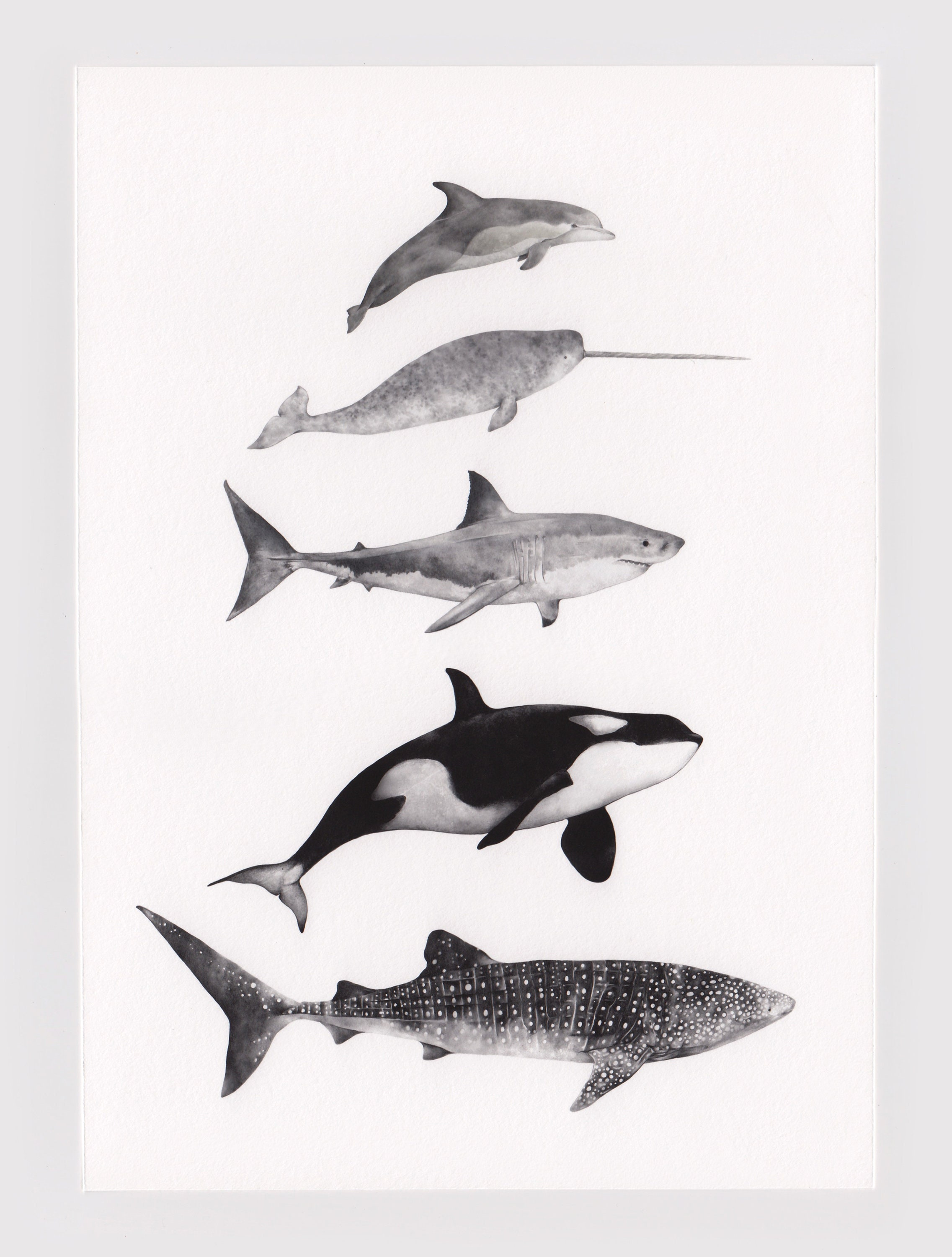 Whale illustration print animal art nursery pencil drawing ocean sea illustration artwork whale shark print narwhal dolphin wall art