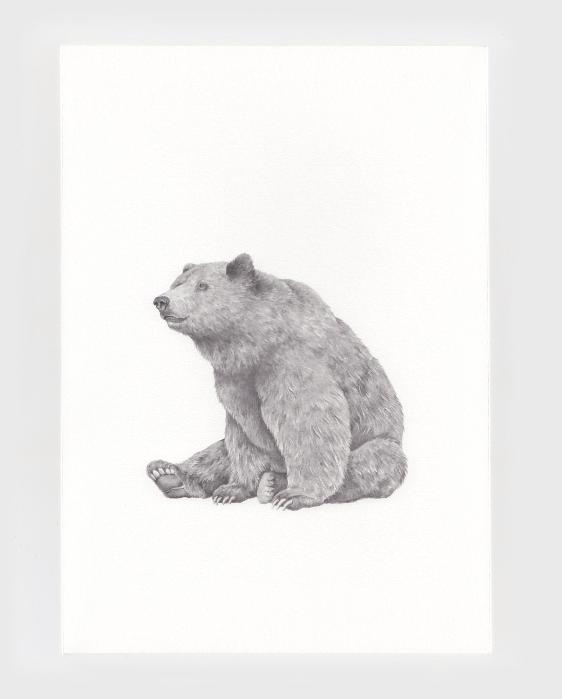Brown bear pencil illustration print bear drawing artwork animal print home decor nursery artwork giclee print grizzly bear drawing
