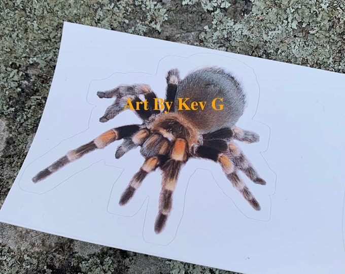 Tarantula Sticker by @ArtByKevG Spider Spiders Arachnids Bugs Insects Scorpion Web Pet Pets Animals Science Anaconda Crocodile Alligator