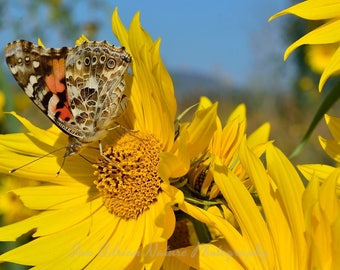 Painted Lady Butterfly - Canvas, Ready to Hang - Insect Bug American Yellow Blue Nature Flora Fauna Macro Flowers Photography Print Photo