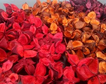 Getrocknete Baumwolle Großhandel Schoten, getrocknete Früchte Bulk, getrocknete Herbst Blumenstrauß, Dekoration, Herbst Hochzeit Bouquet, getrocknete Boutonniere, getrocknete Schale Füllstoff