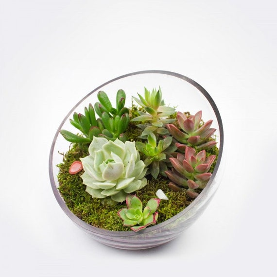The Egg Diy Succulent Terrarium Kit W Hand Selected Succulent Arrangement For Client Gifts Office Gifts Succulent Centerpiece