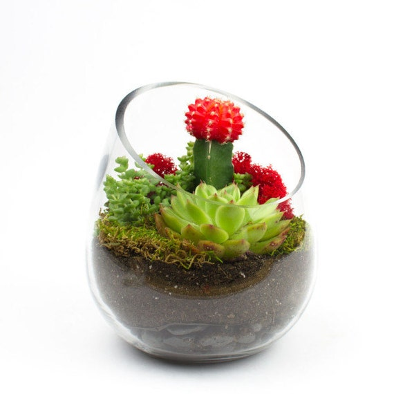 The Sideways Diy Succulent Terrarium Kit Perfect As Etsy