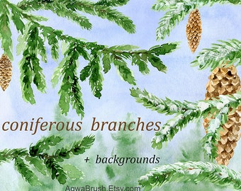 coniferous branches watercolor clipart commercial use pinecone fir cone spruce branch stick snow christmas xmas new year greenery green png