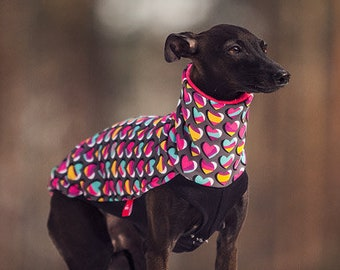 Italian greyhound clothing | cute, original blouse for italian greyhound with sweet, pink hearts | greyhound clothes
