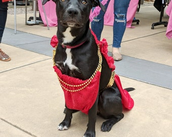 Dive Dog Dress - Red