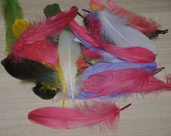 bag of 30 feathers about matching colors