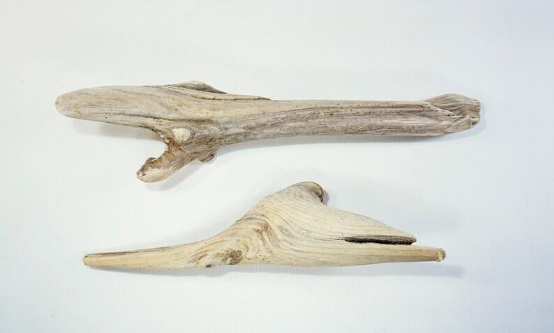 2 Unique Driftwood Sculptures 11.8-14.6/'/'30-37cm Small Driftwood Pieces,Natural Beach Decor,Amazing Driftwood #D21