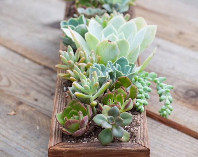 """4x18x2 3/4"""" Succulent planter"""