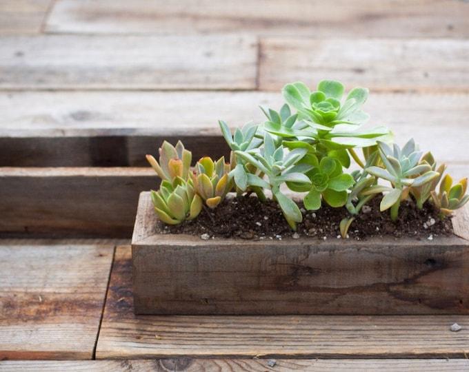 """4x12x 2 3/4"""" succulent planter"""