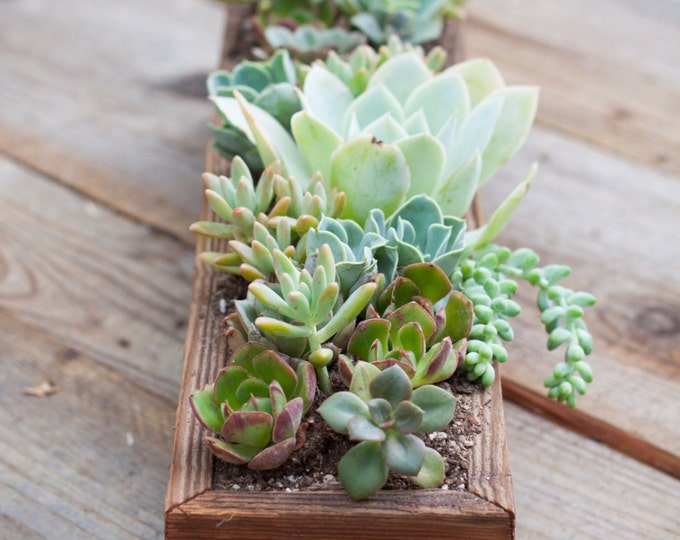 4x18 Succulent planter