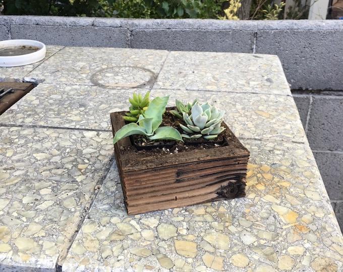 """5.5""""x5.5""""x2.75 Succulent Planter"""