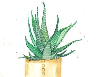 Watercolor Succulent Painting Fine Art Print