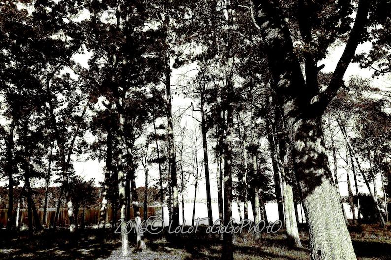 Tree wall art Tree photo prints Black and White Photos black and white wall art Tree Photography forest black and white photo Prints