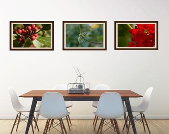 "Art Print Set- ""The Red-Green Collection""- 3 Fine Art print combo- Gallery Wall- Botanical Art- Housewarming- Home- Nature photography"