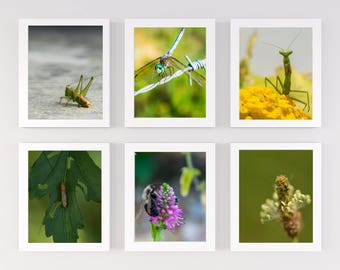 "Art Print Set- ""The Bug Collection""- 6 Fine Art print combo- Gallery Wall- Wildlife Art- Housewarming- Home- Macro photography"