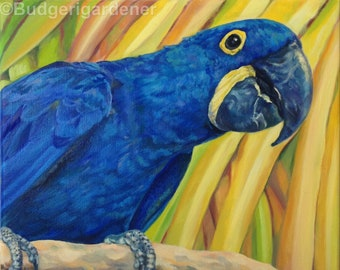 parrots hyacinth macaw giclee print of original oil etsy