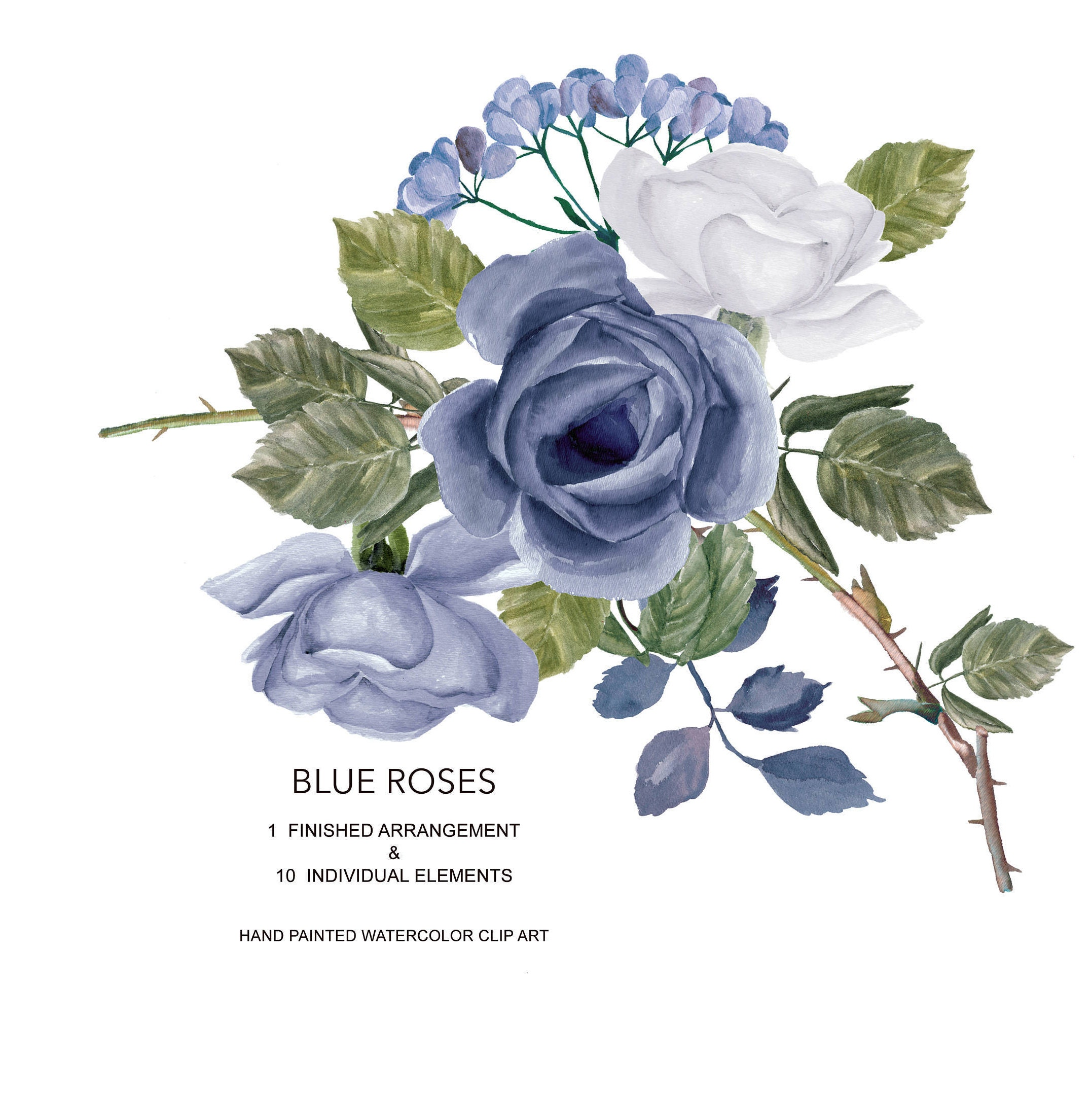 Watercolor Blue Rose Clipart Separate Elements Hand Etsy