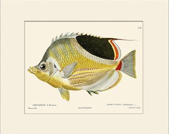 Vintage Fish Print #174, Art Print with Mat, Note Card, Natural History, Beach House Wall Art, Nautical Art, Sea Life Prints, Wall Decor