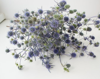 Dry bouquet of thistle blue, thistles, dried flowers, wedding decor, phytomaterial, vase filler, acoustics