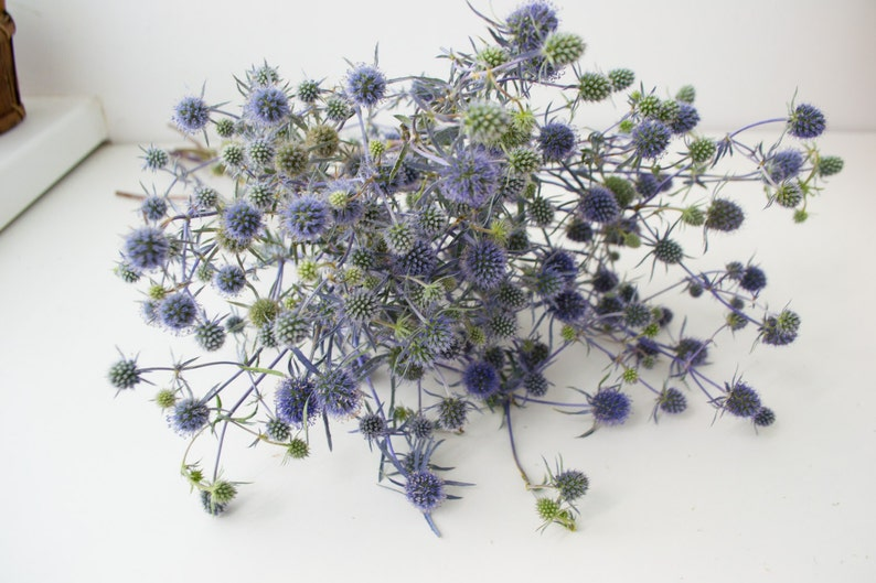 Dry bouquet of thistle blue thistles dried flowers wedding image 0