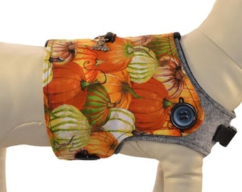 Fall Leaves & Pumpkins * Colorful Gourds and Shiny Golden Foliage * Interchangeable Reversible Pet Dog Cover for PAWZLY Harnesses