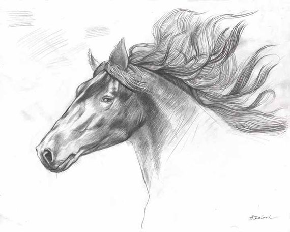 Drucken Von Original Pferd Zeichnung Pferd Kopf Zeichnen Bleistiftzeichnung Bleistiftskizze Print Print Pferdekopf Zeichnung Gedruckt Wird
