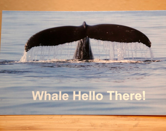 Whale Hello There Holiday Cards