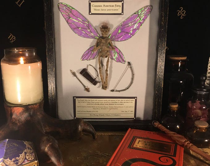 Mounted Fairy Specimen