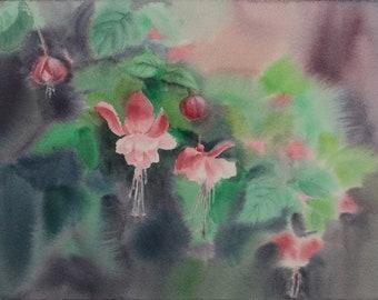 Pink Fuchsia flowers. Original watercolor painting