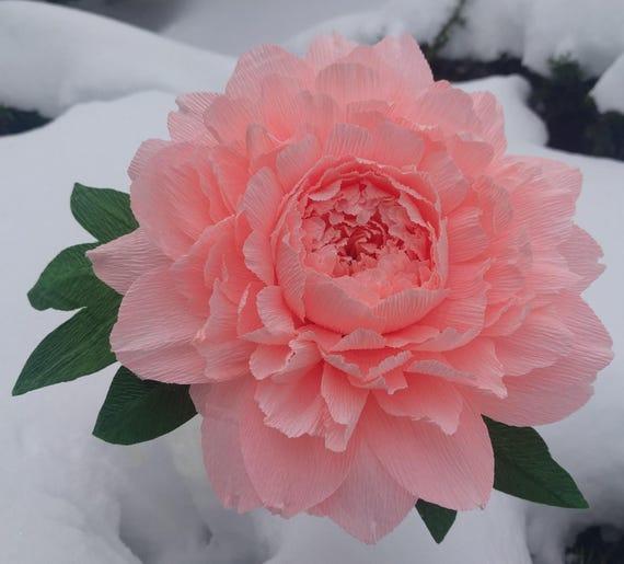 Krepp Papier Blume Einzelne Pfingstrose Krepp Papier Blume Etsy