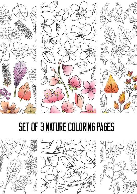 Small Flower Coloring Pages | Coloring Pages | 807x570