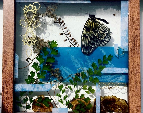 Paper kite butterfly, fungus, brass, cyanotype, and maidenhair fern wall hanging
