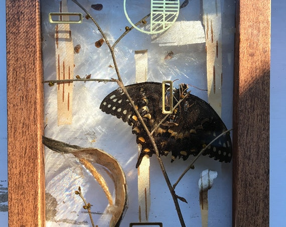 Swallowtail, birch bark, milkweed wall hanging