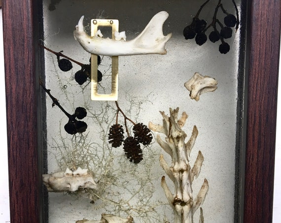 cat skeleton collage with dried berries and tree lichen